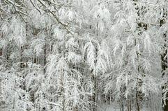横向雪风暴冬天 免版税库存照片