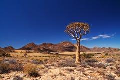 横向颤抖结构树 免版税库存照片