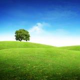横向风景夏天 免版税库存图片