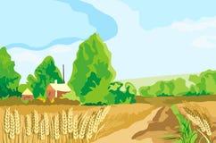 横向麦子 库存照片
