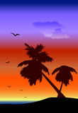 横向palmtrees 库存图片