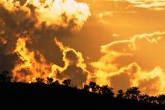 横向pilanesberg 免版税图库摄影