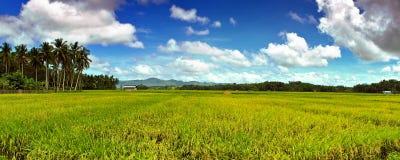 横向ricefield 库存图片