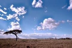 横向serengeti 免版税库存图片