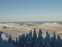 横向snowscape冬天 免版税库存图片