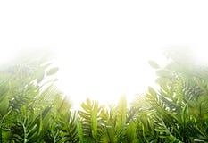横幅和背景的夏天热带叶子 库存图片