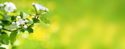 横幅开花标头本质春天万维网 库存照片