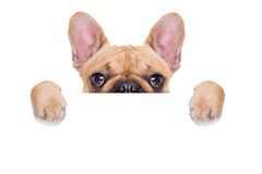 横幅招贴狗 库存图片