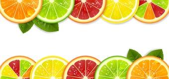 横幅用明亮的柑橘水果 向量例证
