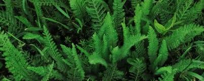 横幅的美好的样式与绿色植物 皇族释放例证