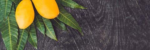 横幅芒果和芒果叶子在一个老木背景长的格式 库存照片
