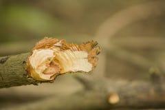 横断面被切除了的年轮木木头 库存照片