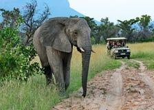 横渡一辆比赛推进车的道路的在徒步旅行队的大象 免版税库存图片