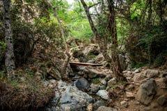横渡在远足的艰苦跋涉的一条小河的一座小桥梁对Caledonia瀑布在Platres附近 库存图片