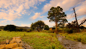 横渡在领域的鸭子小河 库存图片