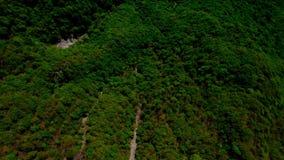 横渡小行政区提契诺州的森林 股票录像