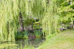 横渡平静的小河的木桥 库存照片
