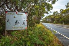 横渡标志的企鹅 免版税库存图片