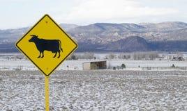 横渡标志的牛 免版税库存照片