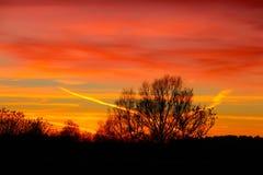 横渡树的颜色在12月 库存照片