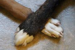 横渡爪子的两条狗 免版税库存照片