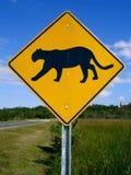 横穿佛罗里达豹 免版税库存照片