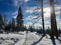 横穿全国的滑雪在国立公园哈茨山在德国的心脏 免版税库存照片