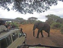 横穿大象 图库摄影