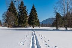 横越全国的滑雪足迹 免版税库存图片