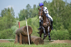 横越全国 与突然的中止的运载的马 免版税库存照片