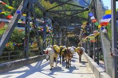 横跨一座桥梁的马有蓬卡车在尼泊尔 免版税库存照片
