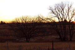 横跨做鸟的牧场地的日出寻找它的最好 免版税库存照片