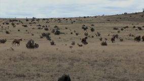 横跨大草原跑的马 股票视频