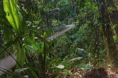 横跨密林的吊桥 免版税库存照片