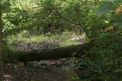 横跨小小河的下落的日志 免版税库存图片