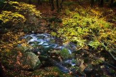 横跨小河的下落的树在森林里 免版税库存照片