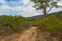 横跨山落后在一个国家公园在巴西 免版税库存图片