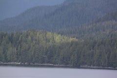 横跨森林的光 免版税库存照片