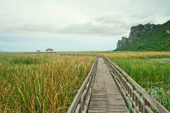 横跨沼泽的木桥 免版税图库摄影