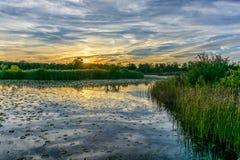 横跨沼泽的神色 免版税库存图片
