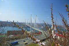 横跨海湾的桥梁,在港口城市 晴天和盛大的绿叶 库存图片