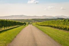 横跨秋天葡萄园的石渣路在新西兰 免版税库存照片