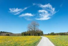 横跨美丽的蒲公英花草甸和一棵大树落后 库存图片