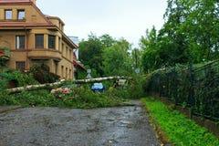 横跨街道的下落的树 免版税库存照片