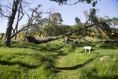 横跨走的足迹的下落的树 免版税库存图片