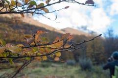 横跨足迹的湿叶子舒展 图库摄影
