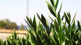 横跨路的绿色植物