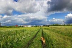 横跨领域的步行与狗 免版税库存照片