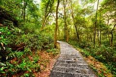 横跨绿色森林的风景石走道 美好的横向 库存照片