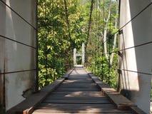 横跨水路的桥梁视图在热带森林里 库存图片